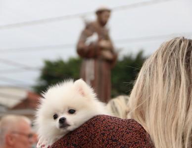 Animais recebem bênção no dia de São Francisco de Assis, em Joinville